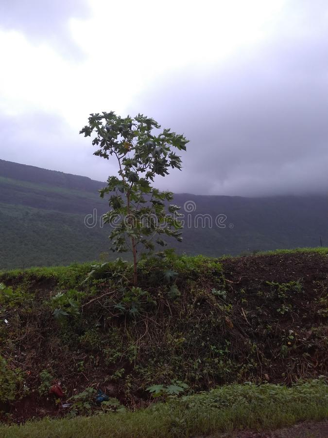 Lonely small tree. Small tree stands lonely, Surrounded by mountain and near road stock photo