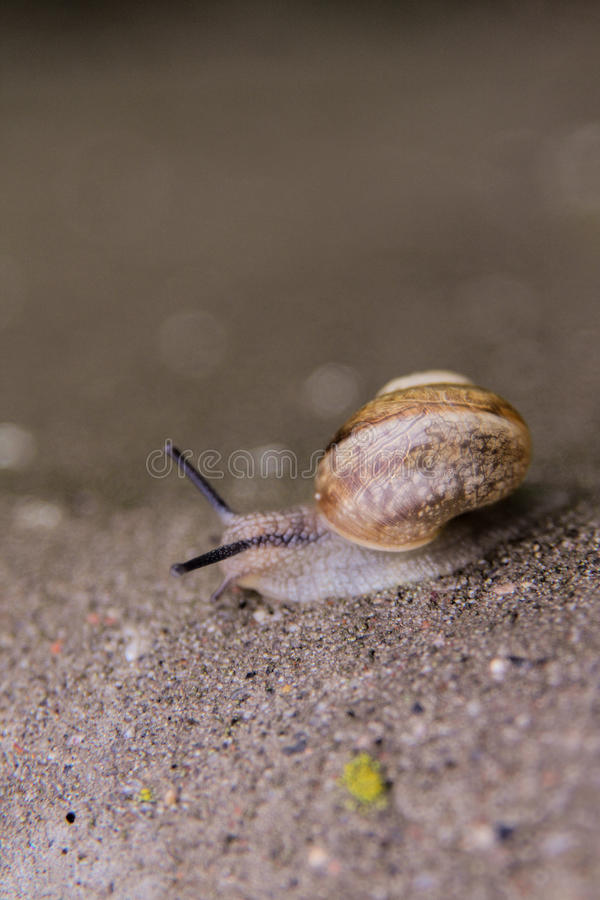 Lonely snail. A snail slowly climbing to travel stock photography