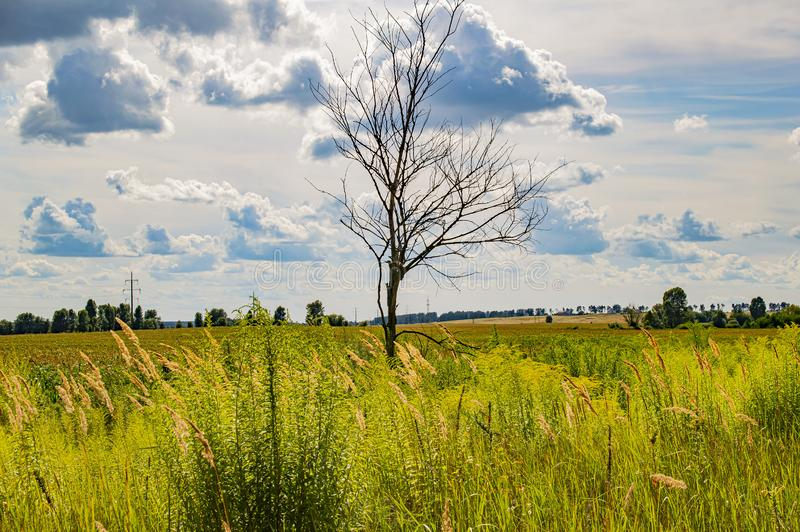 A lonely standing tree in a green field under a cloudy sky. Natural landscape. Background royalty free stock image
