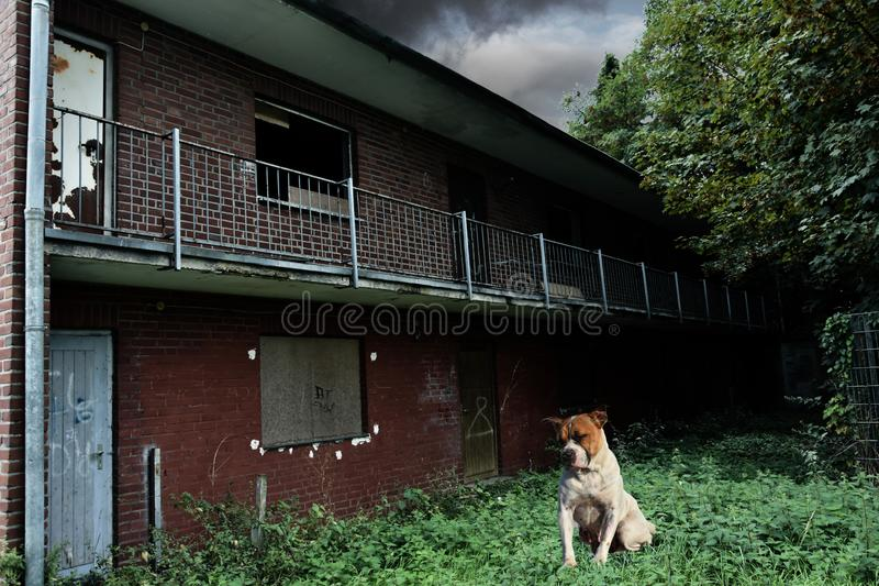 Lonely stray dog at abandoned house. Poor stray dog sitting sad at an abandoned house The old house is in need of renovation, the nature spreads unhindered and royalty free stock photos