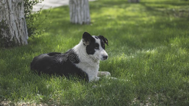 A lonely stray dog with sad eyes is lying on the grass and waiting for its owner. Hungry friend in the park.  stock images