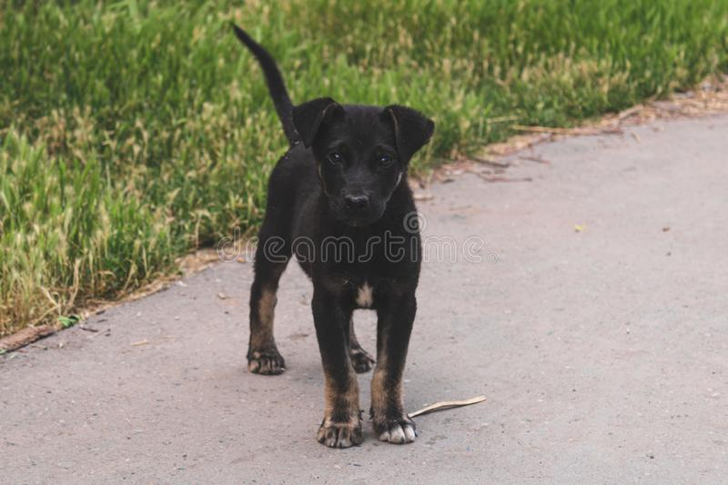 A lonely stray puppy dog with sad eyes is lying on the grass and waiting for its owner. Hungry friend in the park.  royalty free stock image