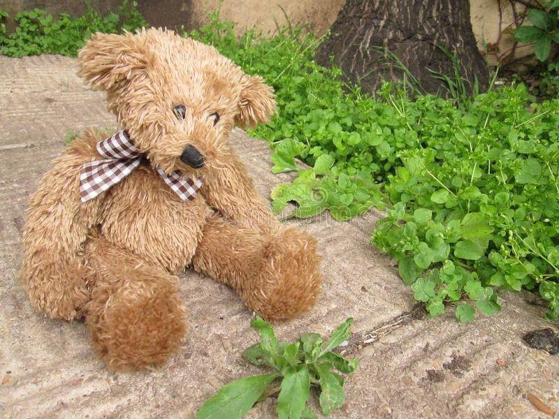 Lonely Teddy Bear on a Path Way. A cute brown teddy bear all alone on a path way with plants in the background royalty free stock photos