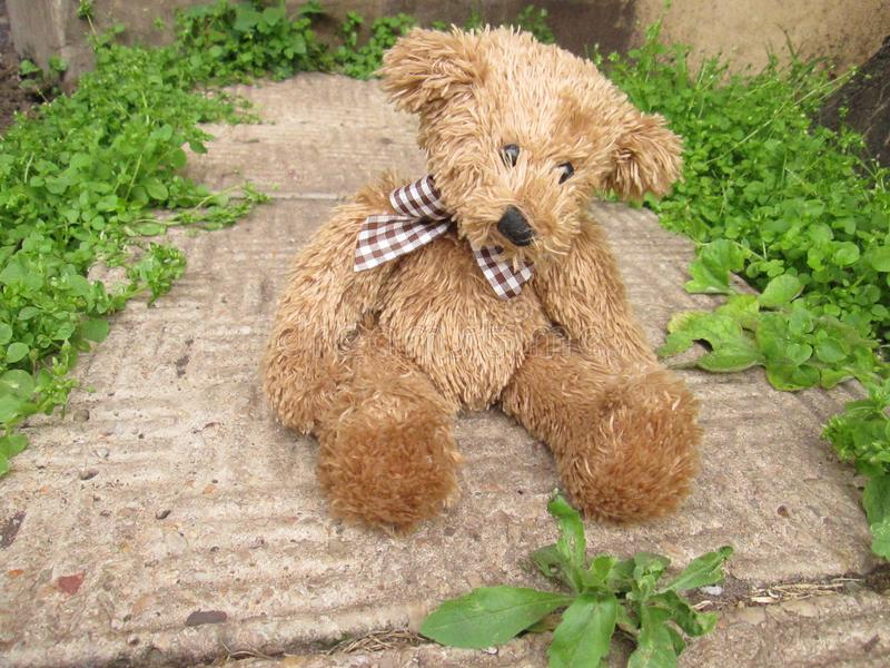 Lonely Teddy Bear on a Path Way. A cute brown teddy bear all alone on a path way with plants in the background royalty free stock photography