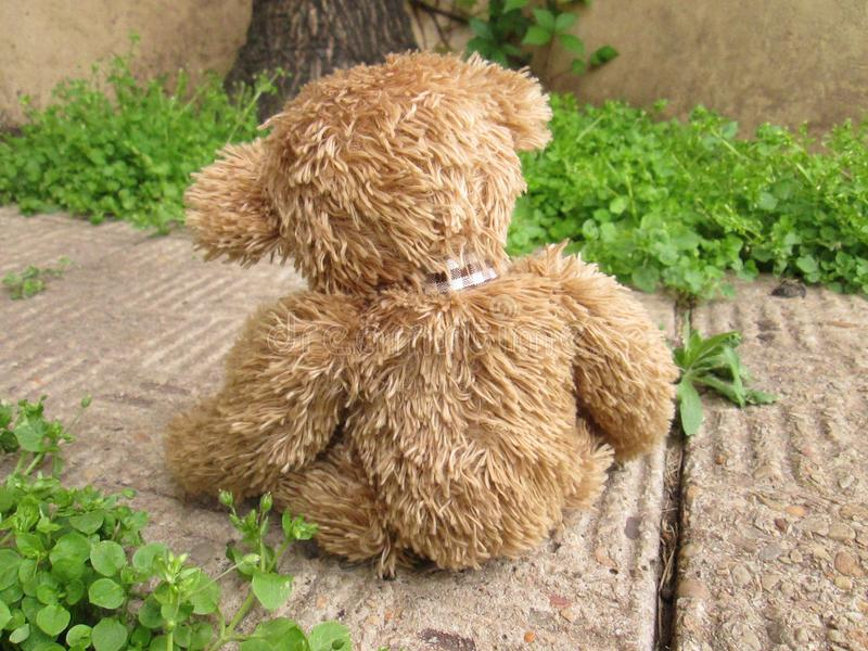 Lonely Teddy Bear on a Path Way. A cute brown teddy bear all alone on a path way with plants in the background stock photos