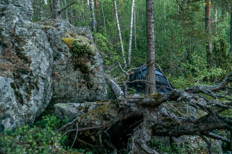 A lonely tent in the wild forest on the shore of the Saimaa lake stock image