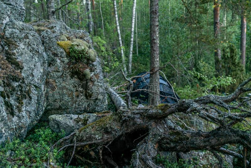 A lonely tent in the wild forest on the shore of the Saimaa lake royalty free stock photos
