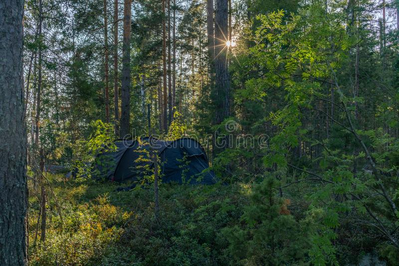A lonely tent in the wild forest on the shore of the Saimaa lake royalty free stock images