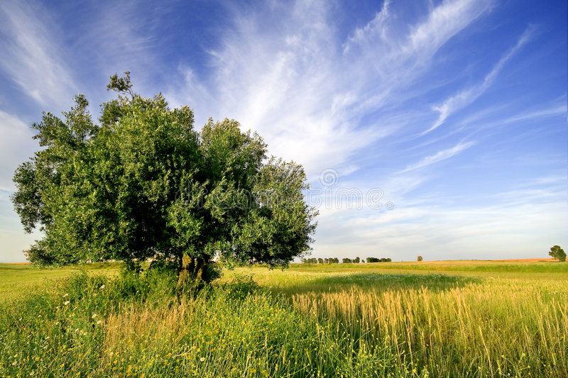 Download Lonely Tree Royalty Free Stock Photo - Image: 1418155