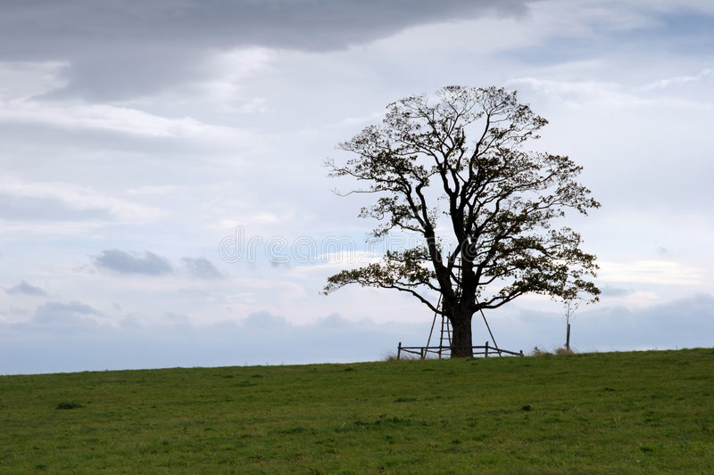 Download Lonely Tree Royalty Free Stock Image - Image: 1422786