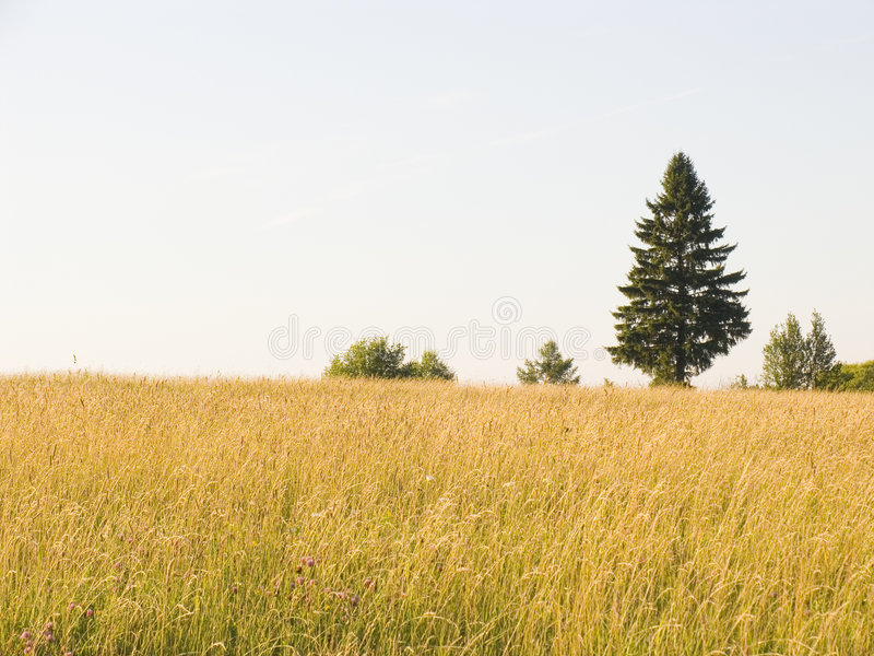 Download Lonely tree stock image. Image of ground, gold, outside - 1424421