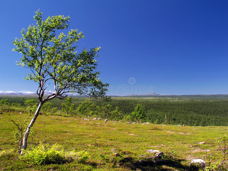 Download Lonely tree stock image. Image of clear, life, cloud - 14674837