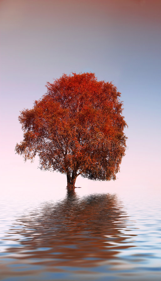The lonely tree. It's an abstract picture of a lonely tree stock photo