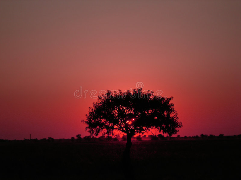 Download Lonely Tree Royalty Free Stock Photo - Image: 1641315