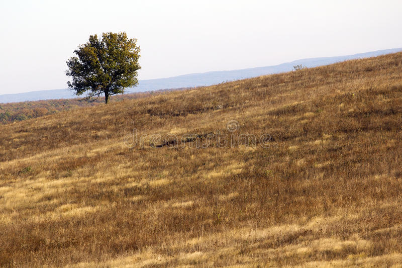 Download Lonely Tree Stock Photography - Image: 16784472