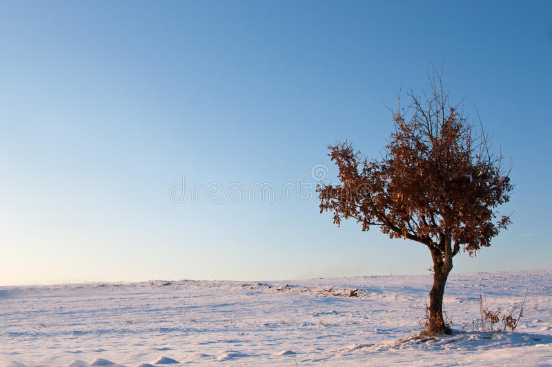 Download Lonely Tree Royalty Free Stock Photos - Image: 17822628