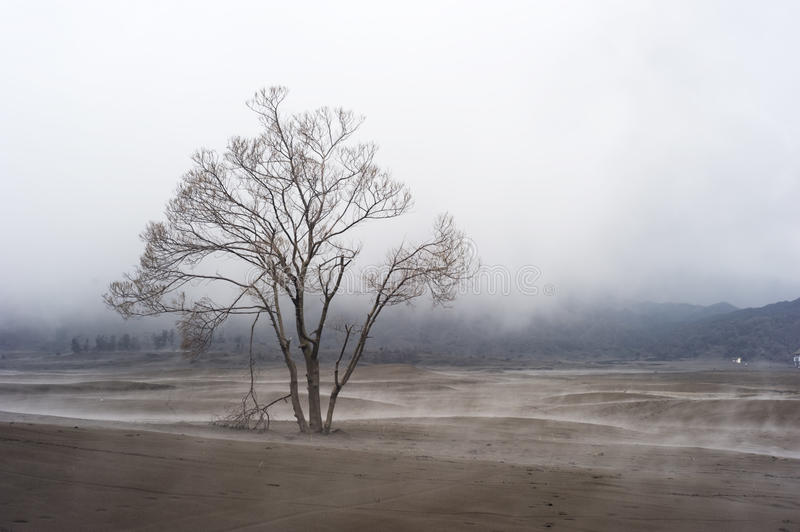 Download Lonely tree stock image. Image of bromo, grey, lava, nature - 20183153