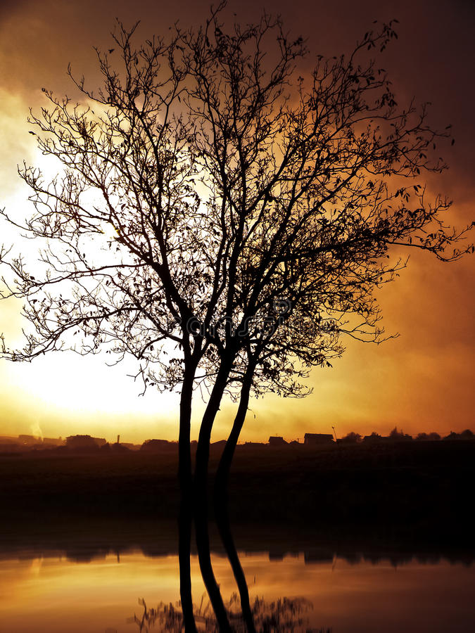Download A Lonely Tree stock image. Image of skies, image, village - 22476833