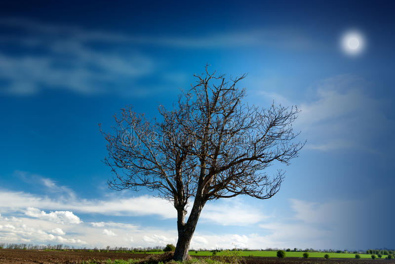 Download Lonely tree stock photo. Image of rural, environment - 25211766