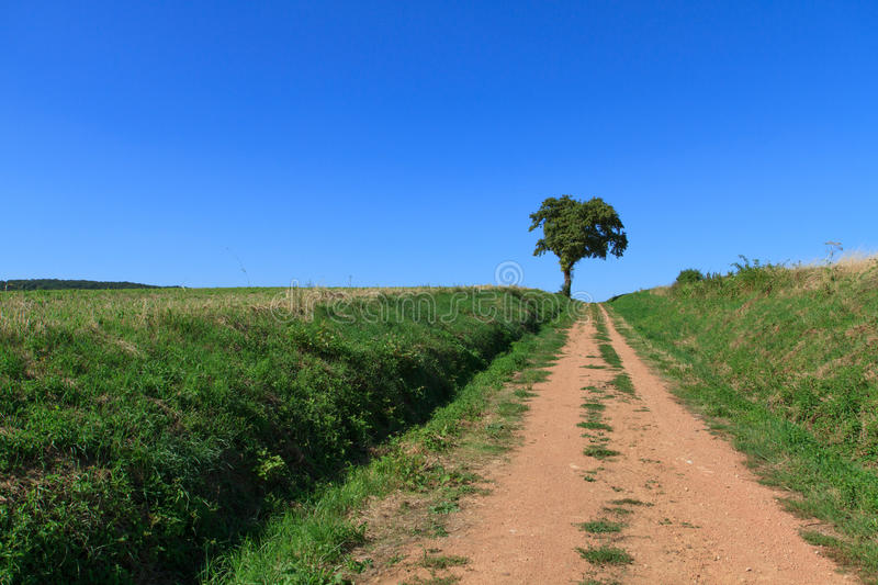 Download Lonely tree stock photo. Image of lonely, meadow, summer - 26981670