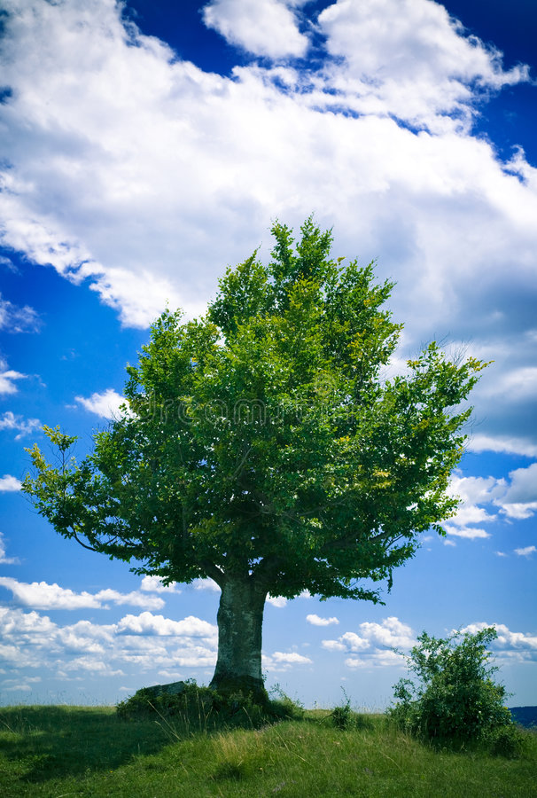 Download Lonely Tree Royalty Free Stock Photos - Image: 2774338