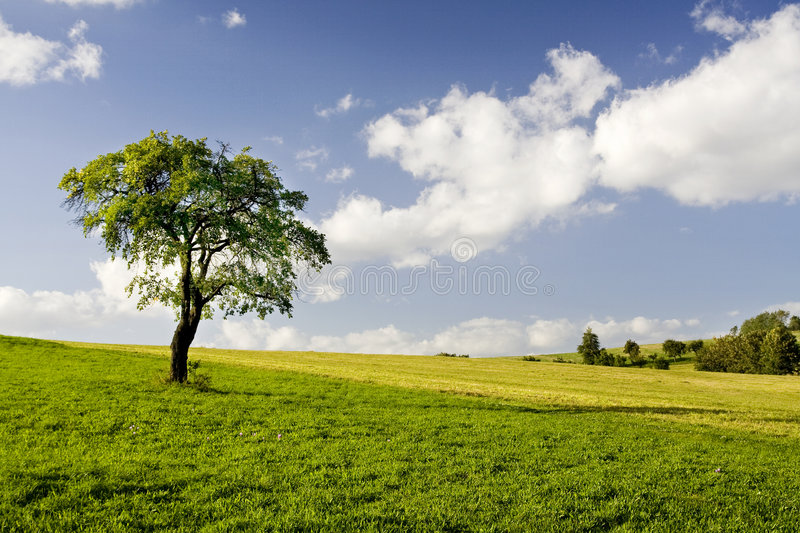 Lonely Tree. In Colour Landscape royalty free stock images