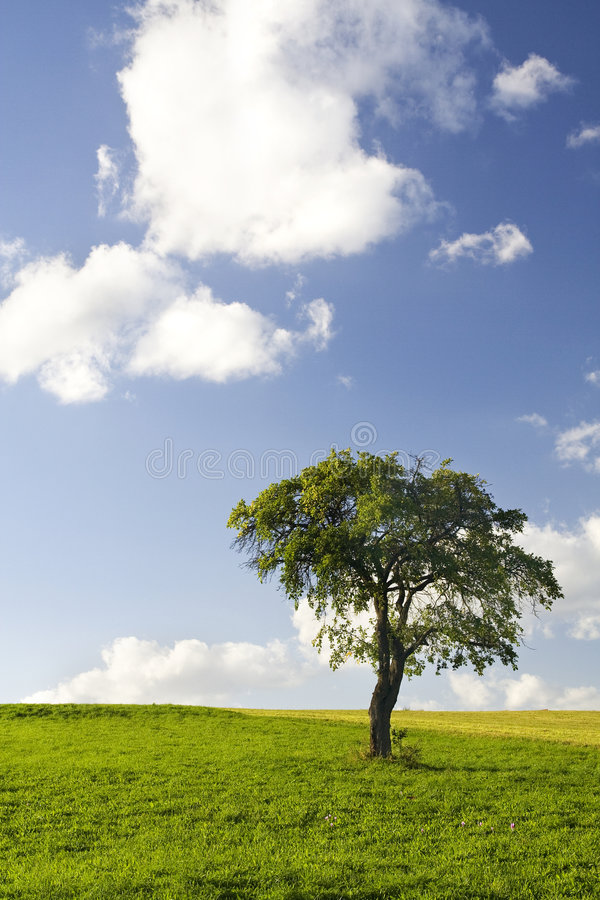 Lonely Tree. In Color Landscape royalty free stock image