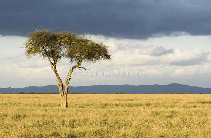 Download Lonely Tree Royalty Free Stock Photos - Image: 3582468