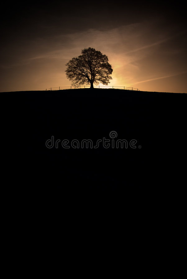 Download Lonely tree stock photo. Image of country, peaceful, landscape - 4014510