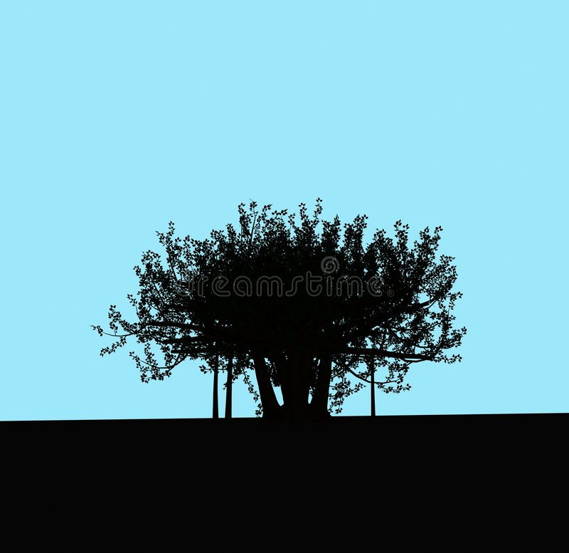 A lonely tree royalty free stock image
