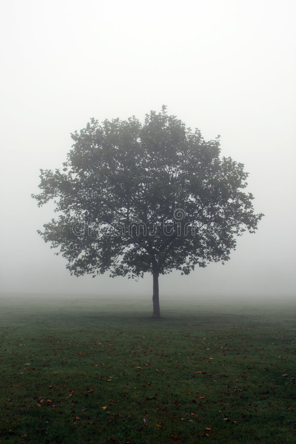 Free Lonely Tree Royalty Free Stock Image - 6538866
