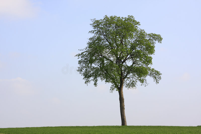 Download Lonely tree stock photo. Image of clouds, green, summer - 9123738