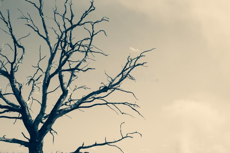 Lonely tree against the sky. tree silhouette. branch tree on the sky background. Tree against the sky. tree silhouette. branch tree on the sky background. copy stock image