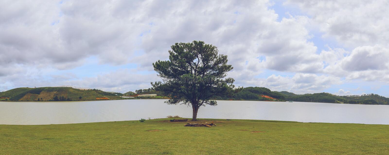 The lonely tree. It is alone on Lake Dankia - Suoi Vang was discovered and named by photographers specializing in landscape photography in Da Lat for many years royalty free stock images