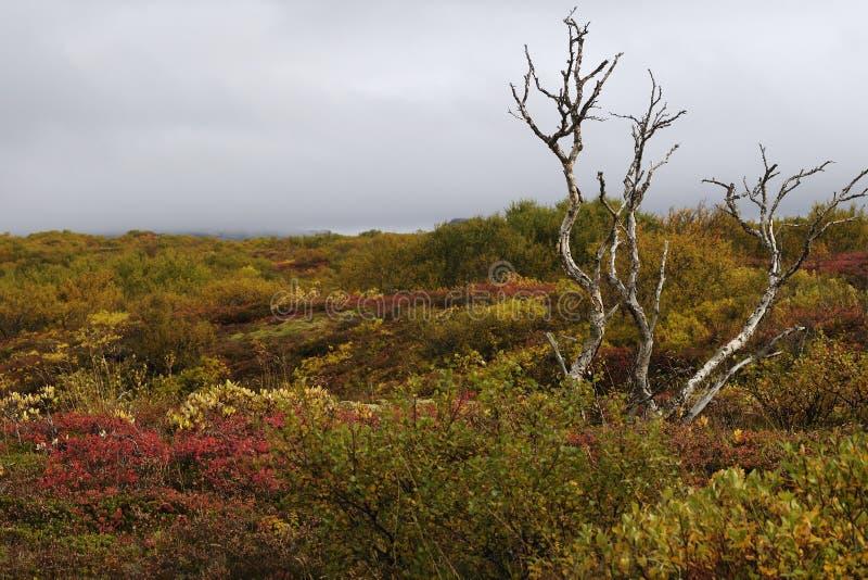 Lonely tree in autumn stock photos