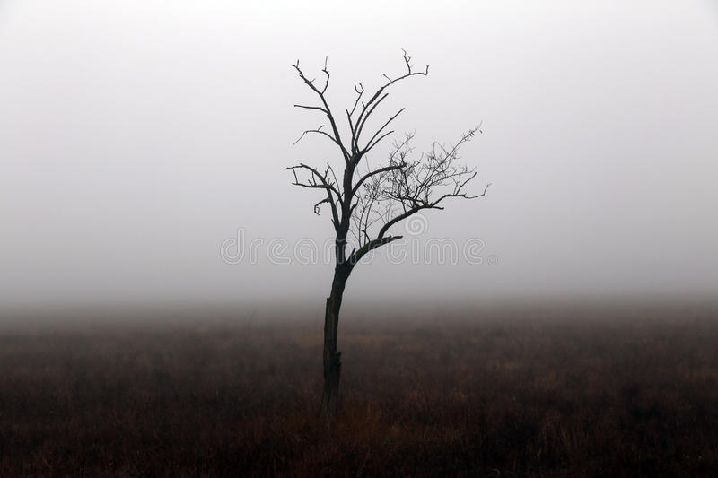 Lonely tree in autumn day in Crimea. stock photos