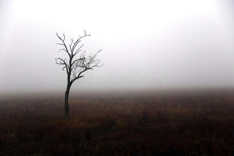Lonely tree in autumn day royalty free stock photo