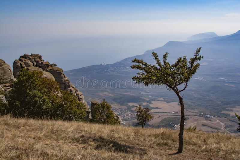 Lonely tree on the background of mountains and sky royalty free stock photos