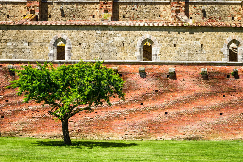 Lonely tree on a background of ruins stock photos