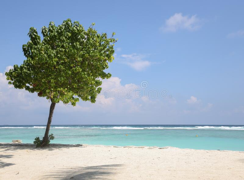 Lonely tree in beach where sky is so blue and see is green and blue colours. Lonely tree in beach where sky is so blue and see is green and blue coloued stock photo