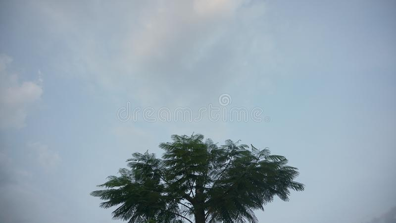 Lonely tree on blue sky. This image can be background or wallpaper stock photos
