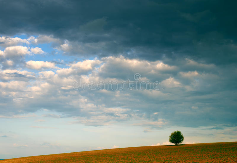 Lonely tree and cloudy sky royalty free stock photos