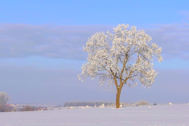 Lonely tree cold ,sunny winter day . royalty free stock photo
