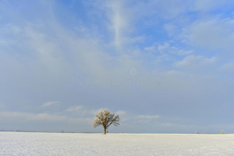 Lonely tree .Cold winter day . Place near Siauliai. royalty free stock images