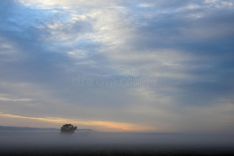 Lonely tree on the corn field at sunrise, Argentina stock photography