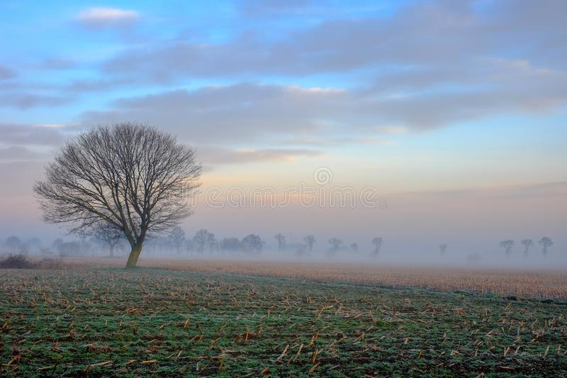 Lonely tree on the countryside under a sunrise sky stock image
