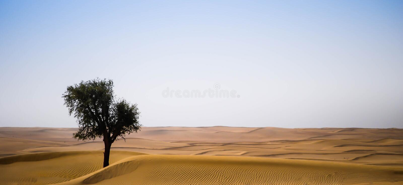Lonely tree in the desert stock photography