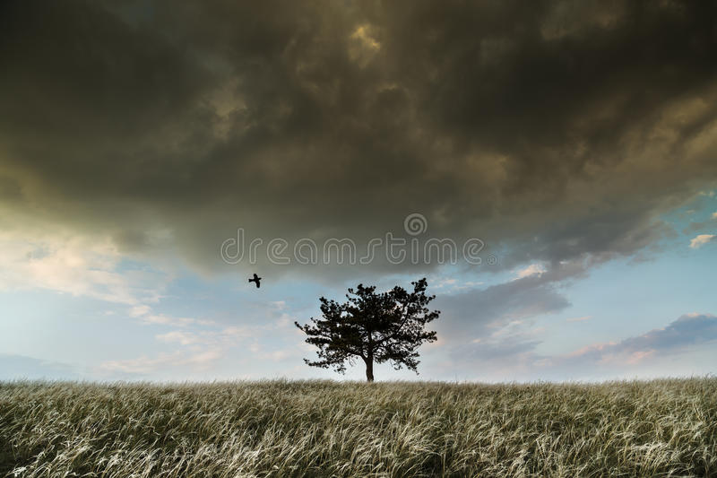 Lonely tree and feather grass field. After storm royalty free stock image