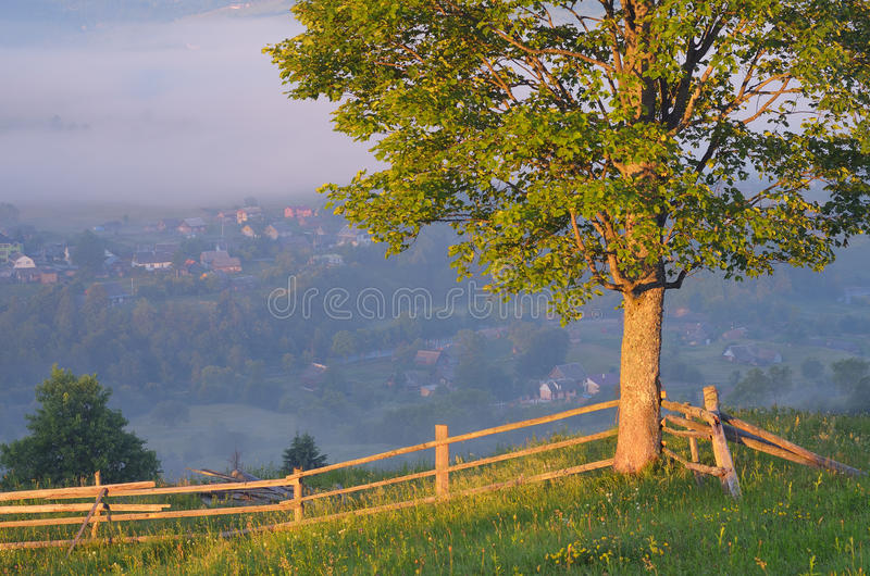 Lonely tree and a fence in the village. Morning landscape with lonely tree and fence in a mountain village. Carpathians, Ukraine, Europe stock photos
