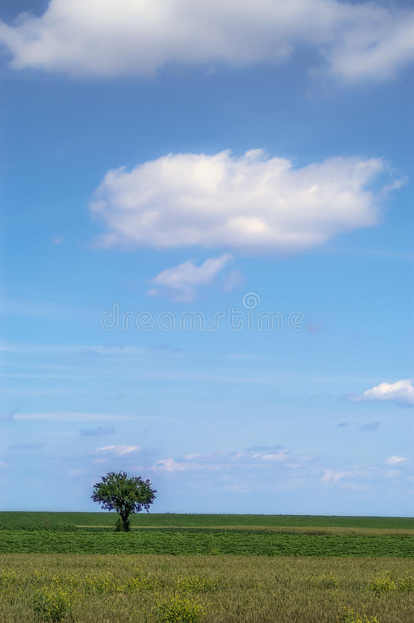 The lonely tree. Lonely tree on the field - Deliblato, Serbia stock image